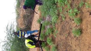 Adopting Manual Irrigation technology